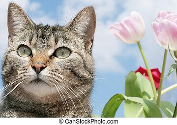 Kitty in the flower garde - Gray Tabby cat enjoying the ...