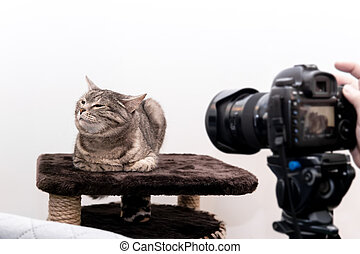 kitty in the studio does not want to be photographed