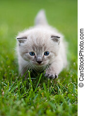 Kitty on the grass. Focus on face and front leg.