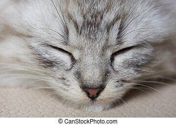 Kitty portrait with closed eyes