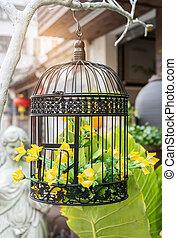 kivirul, eredet, flowers., kalitka madár