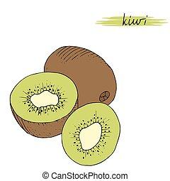 kiwi, aislado, mano, fondo., dibujado, blanco