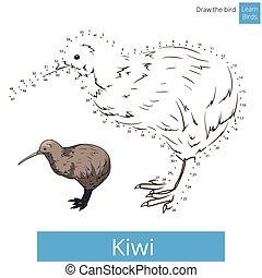 Kiwi bird learn to draw vector - Kiwi learn birds...