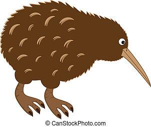 Cute brown new zealand kiwi bird