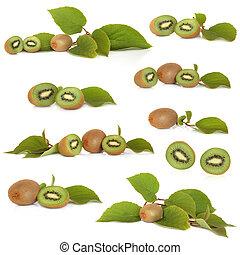 kiwi gyümölcs, gyűjtés