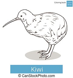 Kiwi learn birds coloring book vector