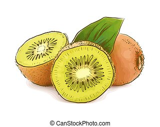 Kiwi. Vector illustration.