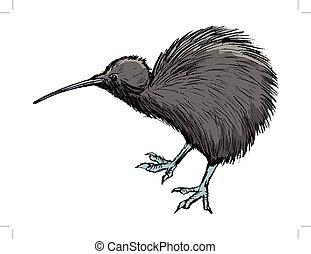 kiwi, zeeland, symbool, vogel, nieuw