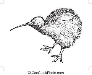 kiwi, zeeland, vogel, symbool, nieuw