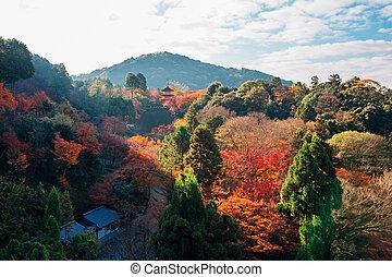 Kiyomizu-dera temple with autumn maple tree in Kyoto, Japan