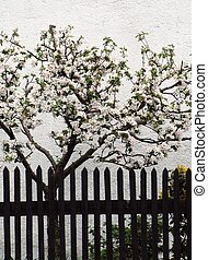 kläd, träd, äpple, blomstringar