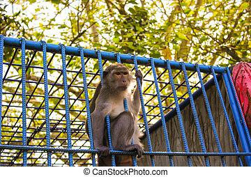 klatka, małpa, zwierzę, ogród zoologiczny