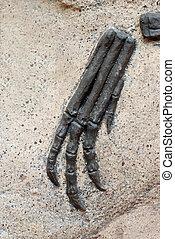 klauw, fossiel