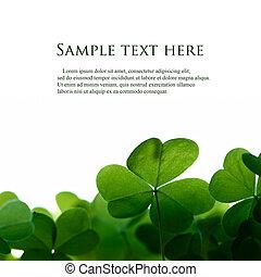 klavertje, ruimte, text., groene, vellen, grens
