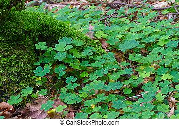 kleeblatt, symbol, -, irland