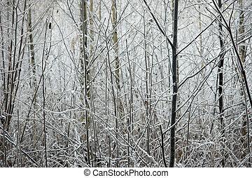 klein, bäume, in, winter