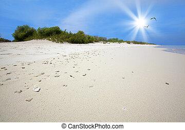 Coral beach on Klein (little) Bonaire, Caribbean