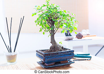 sch ne bonsai baum freigestellt hintergrund wei es stockfotos suche foto clipart csp3980689. Black Bedroom Furniture Sets. Home Design Ideas