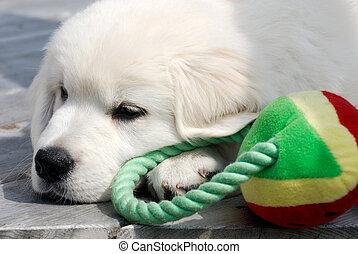 klein, junger hund