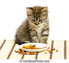 klein, kã¤tzchen, essende, trocken, katz, essen.