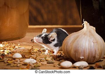 Klein Maus Essende Etwas Kellergeschoss