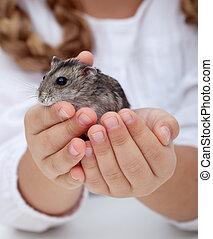 klein meisje, handen, vasthouden, hamster