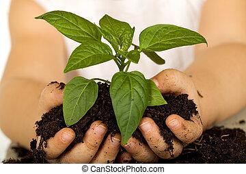 klein meisje, handen, vasthouden, nieuw, plant
