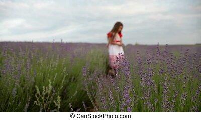 klein meisje, in, een, lavendel