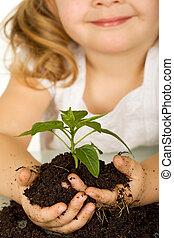 klein meisje, vasthouden, een, jonge plant, in, terrein, -, closeup
