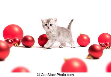 kleine, bontachtig, katje, met, rood, gelul