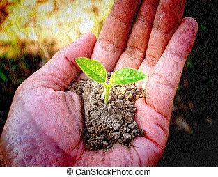 kleine boom, holdingshand