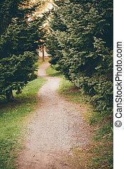 kleine, footpath, park