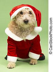 kleine hond, in, santa kostuum