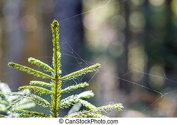 kleine, jonge, groene, spruce, van, een, pijnboom, plant, op, bos, achtergrond., liefde, om te, natuur, en, milieu, bescherming, concept.