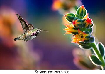 kleine, kolibrie, dichtbij, bloemen, bevroren, bedrijving