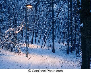 kleine, lightpost, -, winter, bos