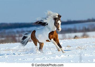 kleine, paarde, rennende , in, de, sneeuw