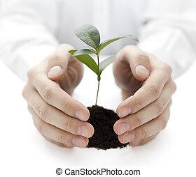 kleine, plant, beschermd, handen