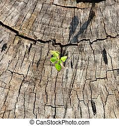 kleine, plant, groeiende, op, boompje, stump.