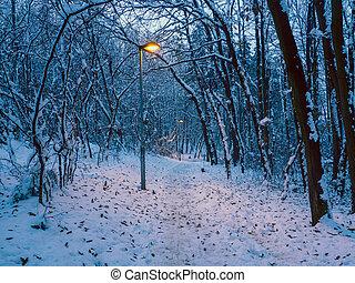 kleine, steegjes, door, winter, bos