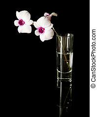 kleine, tak, van, mooi, white;, dendrobium, orchidee, met, donker purper, centra, in, een, glas, op, black , reflecterend, oppervlakte