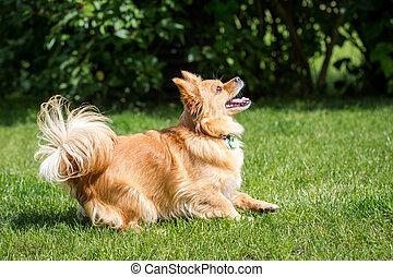 Erwartung - Kleiner brauner Mischlings Hund schaut voller...