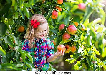 kleines mädchen, pflückend, äpfel, von, baum, in, a, frucht obstgarten