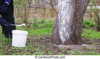 kleingarten, fruehjahr, tünche, baum, tafelkreide, stamm, gärtner, sorgfalt
