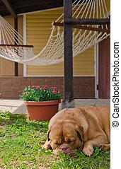 kleingarten, haus, hängemattte, und, schlafen hund