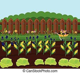 kleingarten, landschaft, getreide, hintergruende, abbildung, vector., ernte
