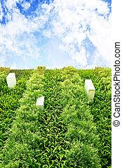 kleingarten, senkrecht