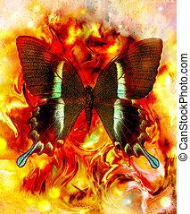 kleur, gemengd, abstract, vlinder, sinaasappel, illustratie, gele, color., achtergrond, milieu, rood