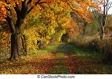 kleur, land, herfst, tsjech