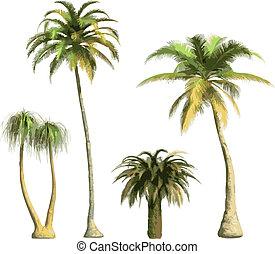 kleur, palmen, -, vector